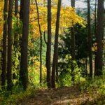 Rottamare ed educare: le azioni per rilanciare il riscaldamento a legna e pellet